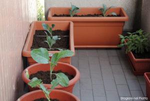 Il balcone di settembre. Dal basso a sinistra in senso orario: broccolo, cavolo romano, due vasi di cavolo nero e salvia