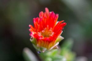 fiore-stagioni-nel-piatto