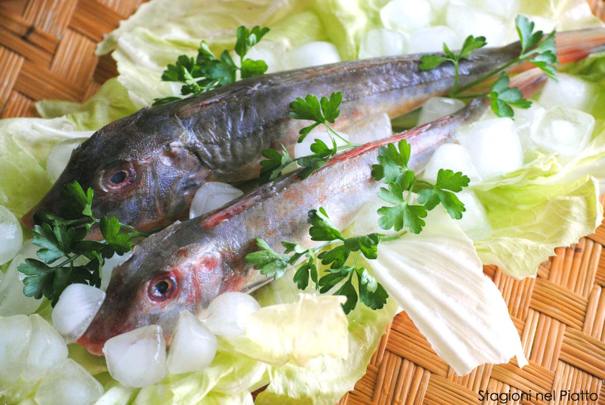 gallinella-di-mare-stagioni-nel-piatto
