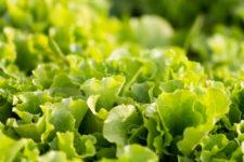 insalata-stagioni-nel-piatto