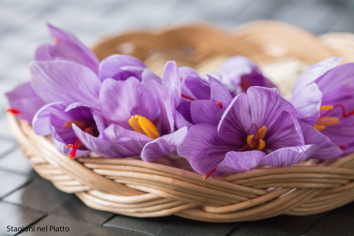Fiori Da Piantare Nell Orto coltivare zafferano: come farlo in vaso o nell'orto